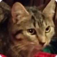 Adopt A Pet :: Shelly - Hudson, WI