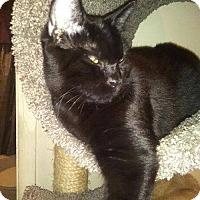 Adopt A Pet :: Snoopy - Walla Walla, WA