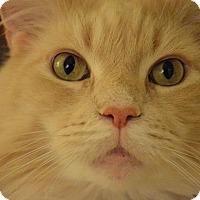 Adopt A Pet :: Mango - Novato, CA