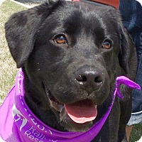 Adopt A Pet :: Charlie - Olive Branch, MS