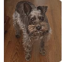 Adopt A Pet :: Albert - LEXINGTON, KY