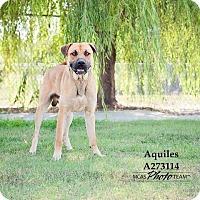 Adopt A Pet :: AQUILES - Conroe, TX