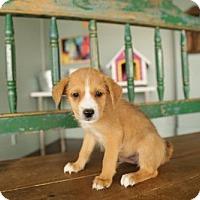Adopt A Pet :: Van - San Antonio, TX