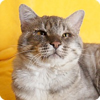 Adopt A Pet :: Columbo - Colorado Springs, CO