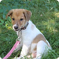 Adopt A Pet :: Millie - New Oxford, PA