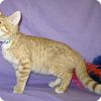 Adopt A Pet :: Garfield - Powell, OH