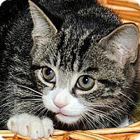 Adopt A Pet :: Finn - Gatineau, QC