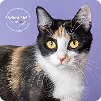 Adopt A Pet :: Katie - Apache Junction, AZ