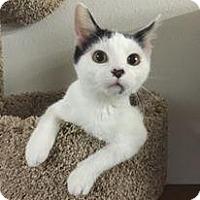 Adopt A Pet :: Silk - Crocker, MO