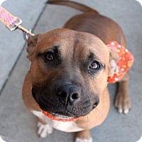 Adopt A Pet :: Alex - Youngsville, NC