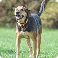 German Shepherd Dog Mix Dog for adoption in Ottumwa, Iowa - Earl
