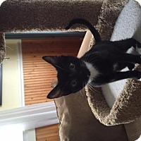 Adopt A Pet :: Dot - Burlington, WA