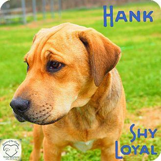 Hound (Unknown Type)/Shar Pei Mix Dog for adoption in Washburn, Missouri - Hank