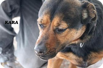 Manchester Terrier Mix Dog for adoption in Denver, Colorado - Cara