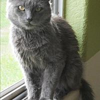 Adopt A Pet :: McGyver - San Antonio, TX