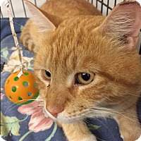 Adopt A Pet :: Sunshine - Forest Hills, NY
