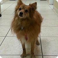 Adopt A Pet :: Trey - Lexington, KY