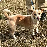Adopt A Pet :: Cody - Greensboro, GA