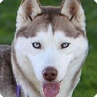 Adopt A Pet :: Zara - Kettle Falls, WA