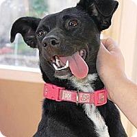 Adopt A Pet :: Oreo - Vista, CA