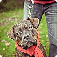 Adopt A Pet :: Shoka - South Park, PA