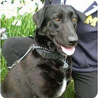Adopt A Pet :: ESTELLA - La Mesa, CA