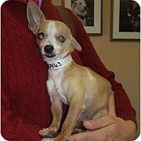 Adopt A Pet :: Parker - Chimayo, NM