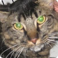 Adopt A Pet :: Calvin - Dallas, TX