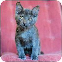 Adopt A Pet :: Paul - Ft. Lauderdale, FL