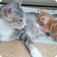Adopt A Pet :: Picnic - Vancouver, BC