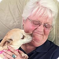 Adopt A Pet :: Annie (Zoie) - Plain City, OH