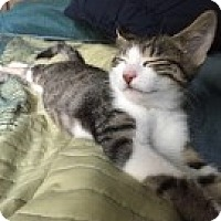 Adopt A Pet :: Chloe - McHenry, IL