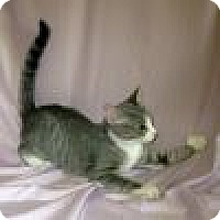 Adopt A Pet :: Paris - Powell, OH