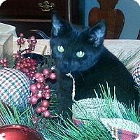 Adopt A Pet :: Raven - Raritan, NJ
