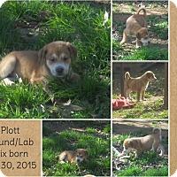 Adopt A Pet :: Zeus-pending adoption - Manchester, CT