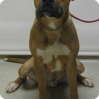 Adopt A Pet :: Tyler - Gary, IN