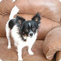 Adopt A Pet :: Mack - Martinez, GA