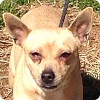 Adopt A Pet :: Lucie - Staunton, VA