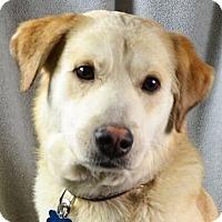 Adopt A Pet :: Maverick - Minneapolis, MN