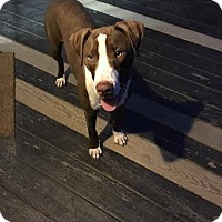 Adopt A Pet :: Armani - Charlotte, NC