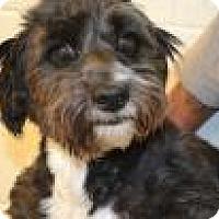 Adopt A Pet :: Oreo - Miami, FL