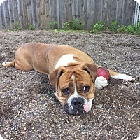 Adopt A Pet :: Zekke - Red Wing, MN