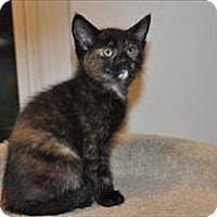 Adopt A Pet :: Phoebe K6 Aka Diana Prince - Sherwood, OR