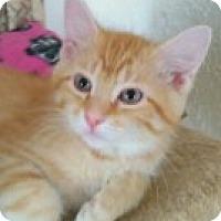 Adopt A Pet :: Rio - McHenry, IL