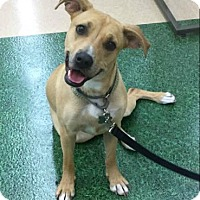 Adopt A Pet :: Lolita - Loxahatchee, FL
