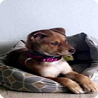 Adopt A Pet :: ARIE - San Antonio, TX