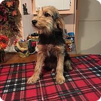 Adopt A Pet :: Aaron - Glastonbury, CT