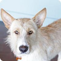 Adopt A Pet :: Fernando - San Antonio, TX