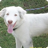 Adopt A Pet :: Luke  Courtesy Post - Tulsa, OK