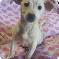 Adopt A Pet :: Lizzie - Los Angeles, CA